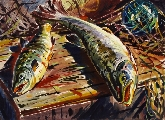 Salmon in Vitrupē II