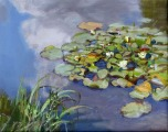 After the rain. Water lilies